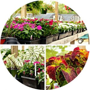 agripro lawns flowers and plants - Lawn Care in Olive Branch, Southaven and North MS - AgriPro Lawn & Mulch Center
